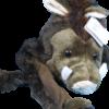 bonnet sanglier animal emblème ardennes foret 2 removebg preview