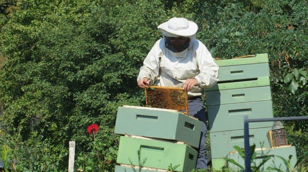 Beekeeper 941688 1280